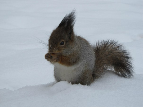 На морозе: маленькя белочка