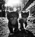Фото Стаса Маврова №12