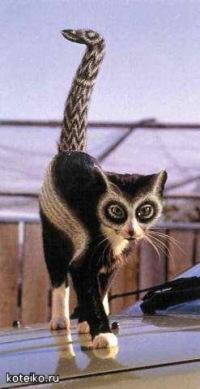Стрижка котов