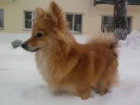 Анна Елисеева, 21 февраля , Новосибирск, id114677243