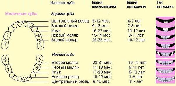 ...у ребенка воспользуйтесь следующей формулой: от возраста ребенка в месяцах отнимите 4. Но это идеальный вариант.