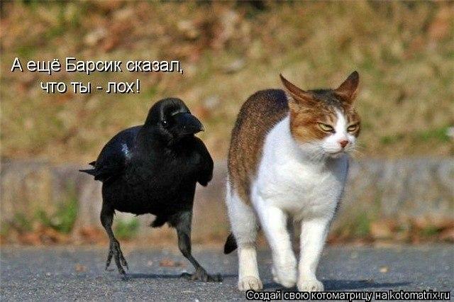 http://cs9775.userapi.com/u99087846/-14/y_d9b90ae1.jpg