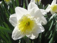 Daffodil Love myself, 24 января , Москва, id84845192