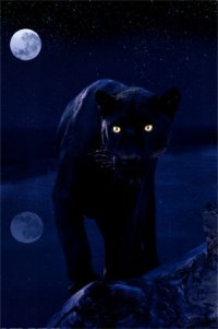 Night Hunter, 4 мая , Москва, id82864085