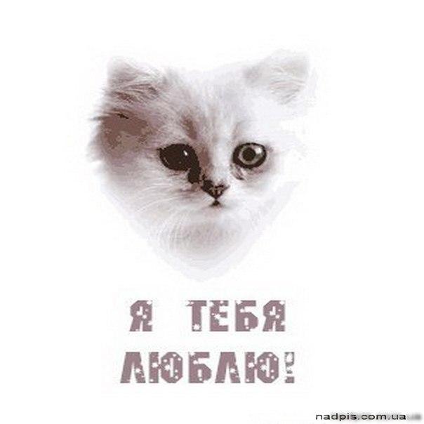 прикольные картинки с надписями парню ...: pictures11.ru/prikolnye-kartinki-s-nadpisyami-parnyu.html