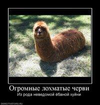 Роберт Давлетов, 24 августа 1988, Уфа, id67200619