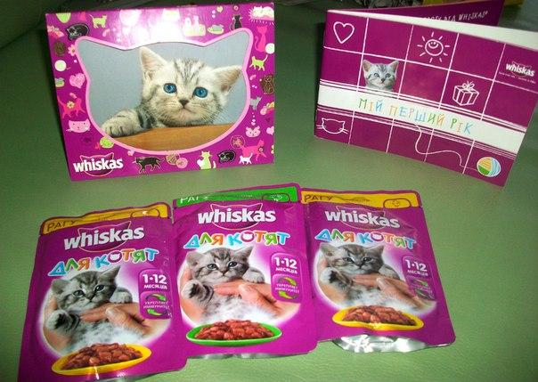 Подарок котёнку от вискас 62