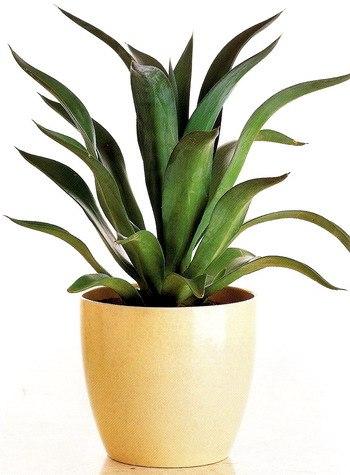 Кімнатні рослини домашній сад