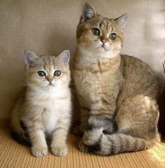 Заразиться можно, даже не имея дома кошки