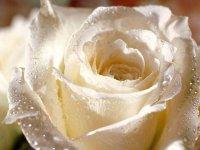 Roz@ Богиня цветов, 27 января 1990, Великий Устюг, id86191785