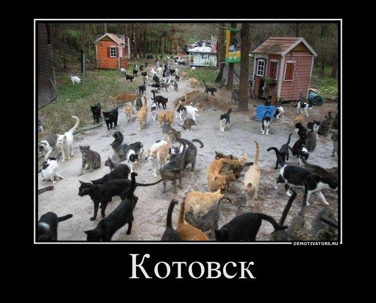 Просторном котята в дар челябинск тут опомнился крикнул