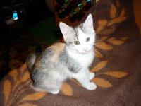 Маленькая Кошечка, 28 марта 1988, Обнинск, id62544530