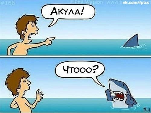 В приключенческих книгах и кино появление акулы обычно.