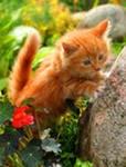 Кошка-Ли Фурри, 15 августа , Чита, id158340771