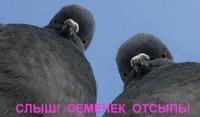 Алекс Алекс, 24 августа , Барнаул, id104435578