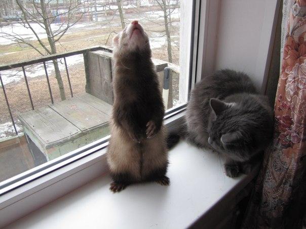 картинки кошки звери