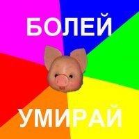 Свиной Грип-Близко
