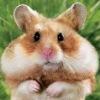 *°•♥●•.๏̮͡๏ любители  животныхツ♥٠•●♥*.