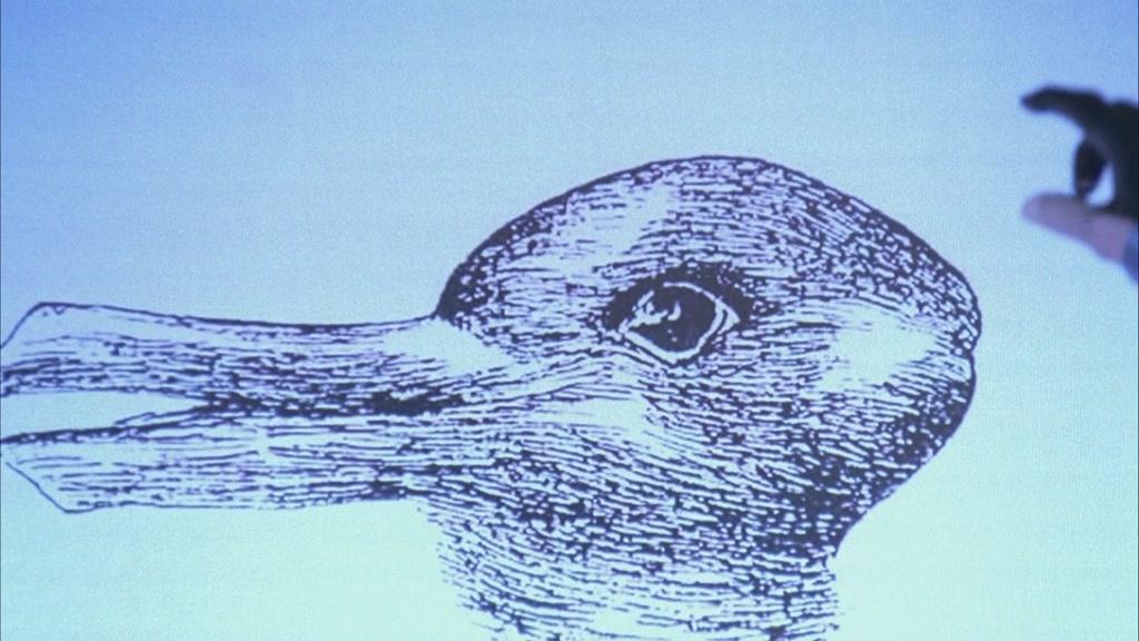 заяц - утка