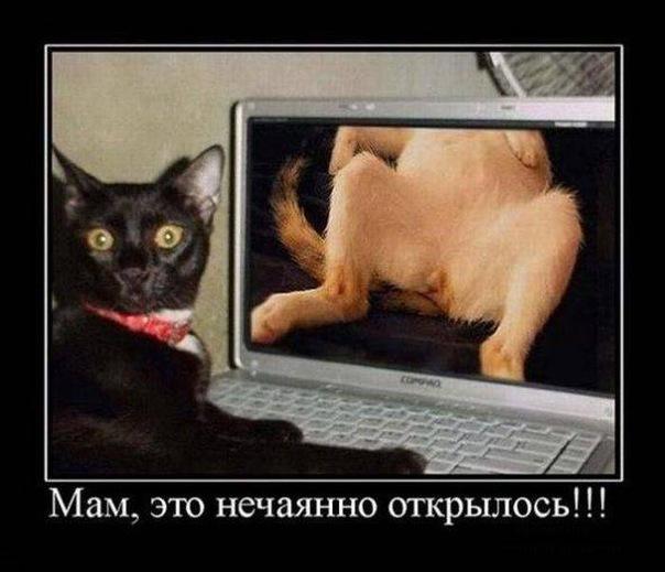 фото смешные очень смешные