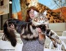 Точнее это она. Кошка живет в США, ей полтора года и ее рост от...