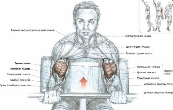 Подъем штанги на скамье Скотта является одним из самых трудных, но в то же время эффективных упражнений на бицепс.