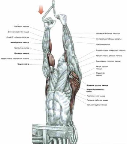 Анатомия Плакаты Скачать
