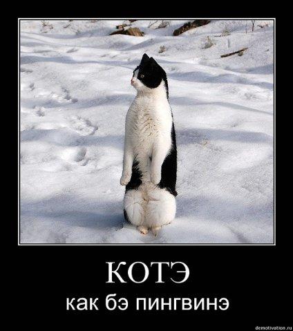 http://cs9865.vkontakte.ru/u37282149/94717796/x_4649c56a.jpg