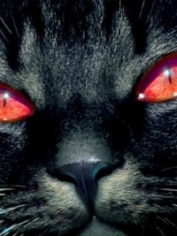 Коте Демон, 1 января 1977, Черкассы, id114633444