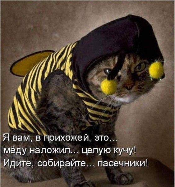http://cs9870.vkontakte.ru/u103285569/-5/x_9e0941ec.jpg