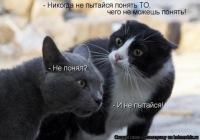 Ефим Шефрин, Минск, id50778019