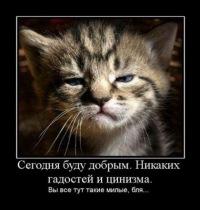 Алексей Похилько, 6 ноября 1980, Ставрополь, id123287801