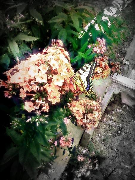 Больше необычности, бабочку теперь плохо видно, не стал с этим что-то делать.