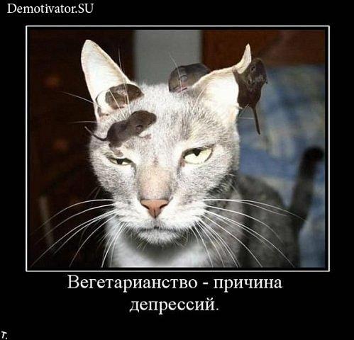 [Pilt: x_fca728f4.jpg]