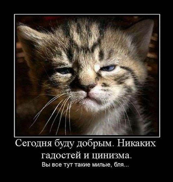 http://cs9894.vkontakte.ru/u4684751/116934863/x_8b9213c5.jpg