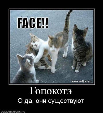 http://cs9894.vkontakte.ru/u6333662/58871046/x_9d8b7655.jpg