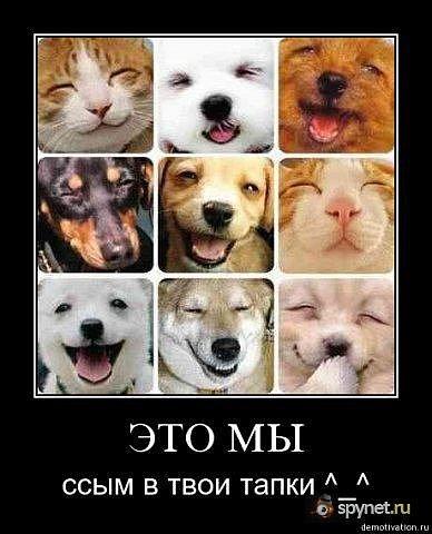 http://cs9902.vkontakte.ru/u56810494/114473754/x_3e13c694.jpg