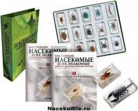 моя коллекция насекомые и их знакомые