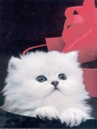 Nastjuwa Petrova, 31 августа 1982, Речица, id104623359