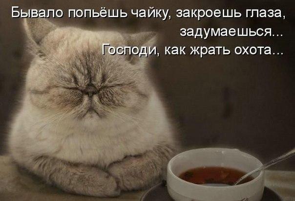 http://cs9906.vk.me/u761976/-14/x_81ed4f17.jpg