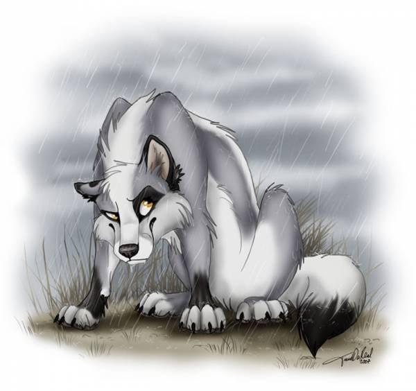 Нарисованные волки смотрите также