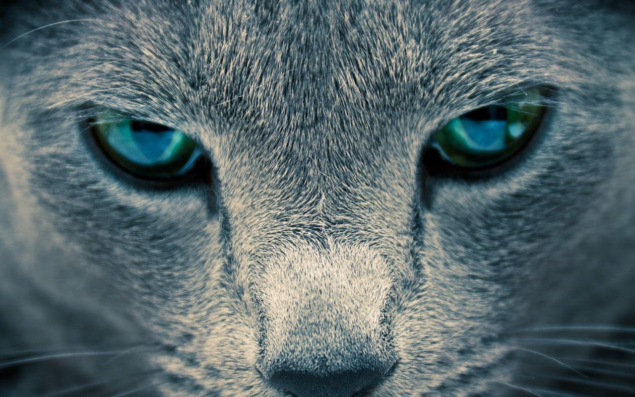 Как сделать глаза как у кошки макияж Визаж и здоровье глаз 25