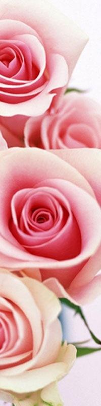 Комнатные цветы и растения в нашем