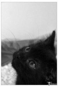 Black Cat, 29 января , Алчевск, id96751428