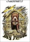 Питбуль и Стафф <любимые породы собак>