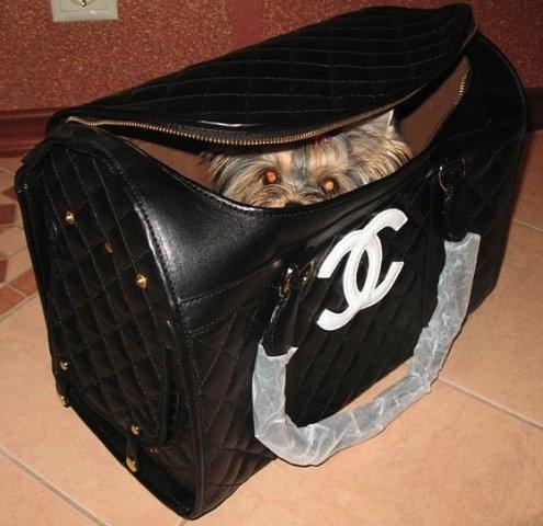 сумки переноски для кошек. сумки переноски для кошек + фото.