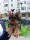 http://cs9939.vkontakte.ru/u95233200/137760870/m_ab7ba44c.jpg