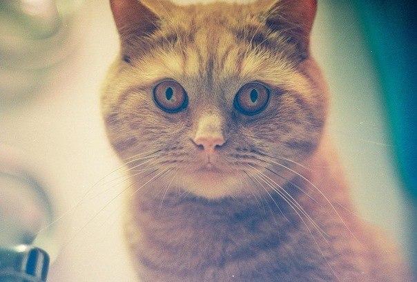 Красивые и профессиональные фото котов UFm2ssWzNdM