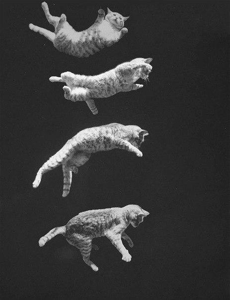 Красивые и профессиональные фото котов KpctXw4Me80