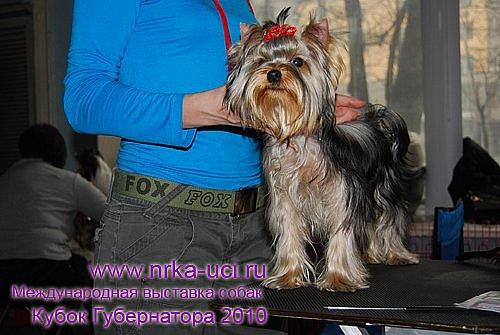 http://cs9945.vkontakte.ru/u1233496/100662980/x_f4bf12af.jpg